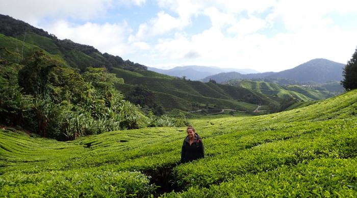 Sophie dans la Boh tea plantation des Cameron Highlands en Malaisie.