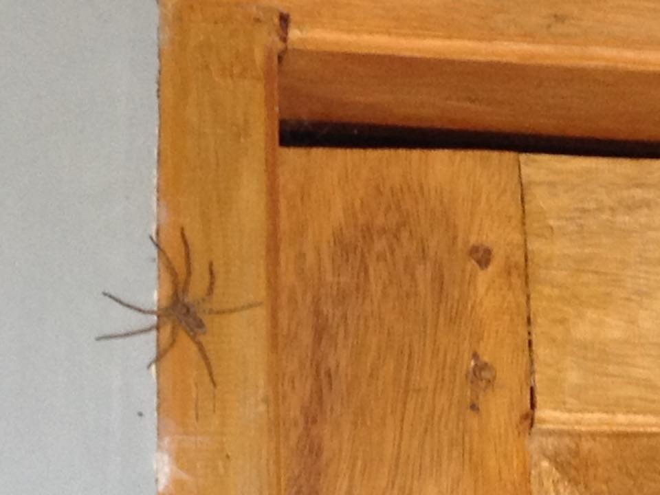 araignée porte