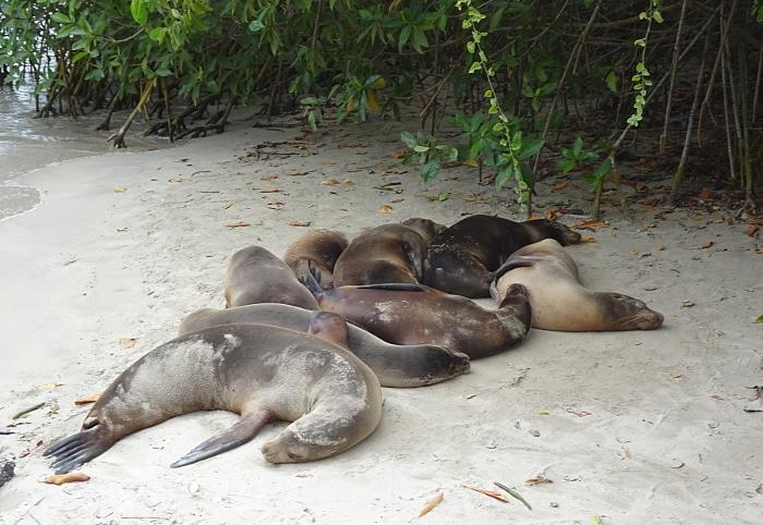 voyage auxvoyage aux Galapagos lions de mer groupe
